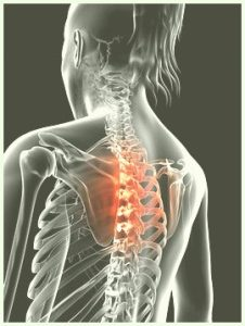 colonne vertebrale thoracique